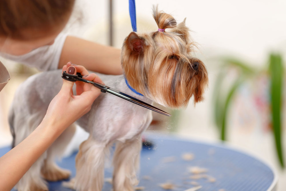 Cut-Dog's-Hair-with-Scissors