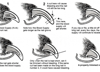 How to trim your dog's nails correctly