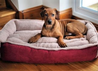 best beds for dogs