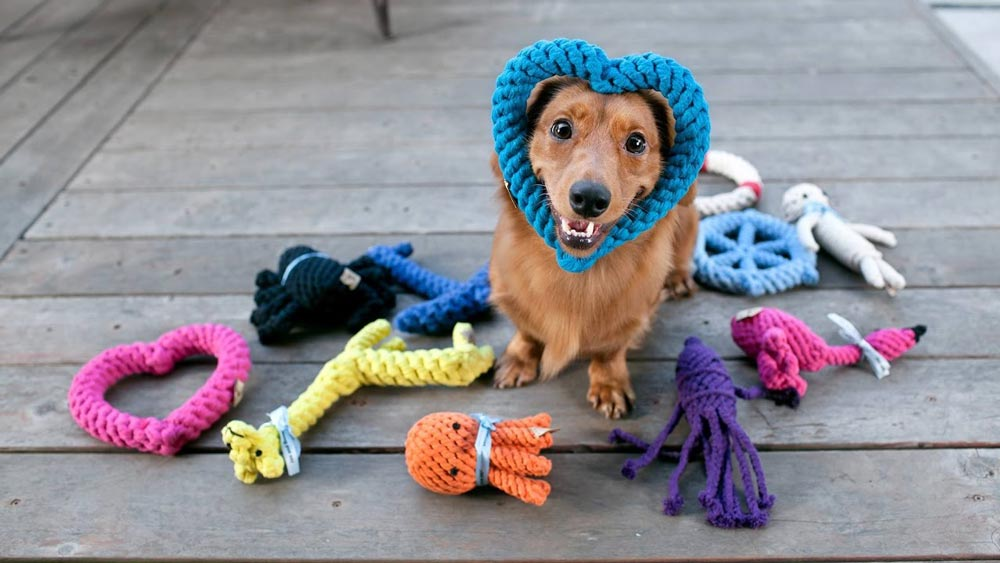 best-toys-for-dogs
