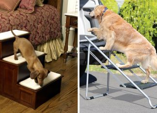 Best-Dog-Steps