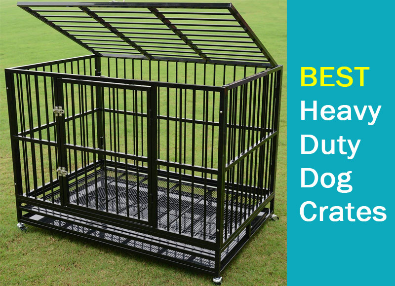 Best Heavy-Duty Dog Crates