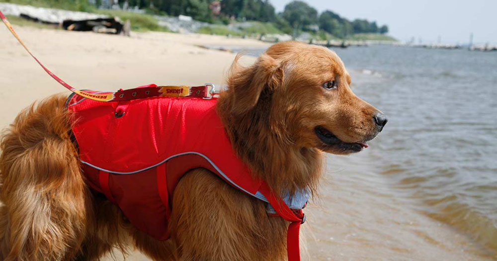 Best Life Vests For Dogs