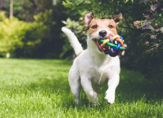 Wireless-Dog-Fences---Pros-and-Cons-of-Invisible-Dog-Fences